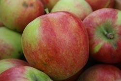 Foto von Äpfeln der Sorte Filippa
