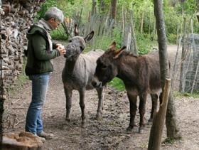 Sabine Führes-Leinweber mit den Eseln Ikarus und Frederic